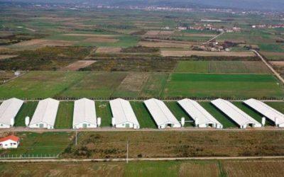 climatización evaporativa granjas de cerdos