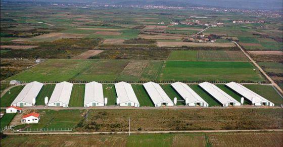 Climatización evaporativa en granjas de cerdos